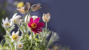 Nahaufnahme einer blühenden Pflanze mit Kopierraum foto