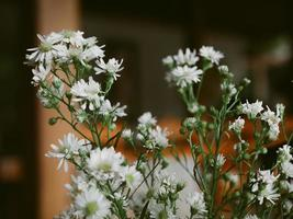 schöner Strauß Kamillenblütenblätter foto