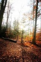 Bäume in der Natur im Park foto