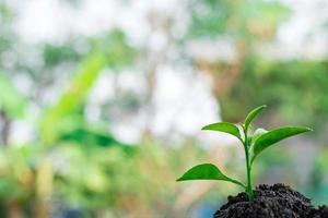 grüne Jungpflanze in der Natur foto