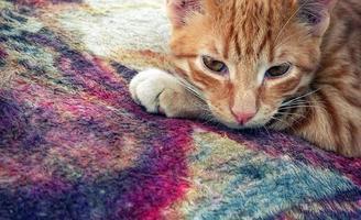 süße Tierhauskatze foto