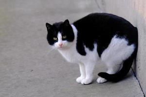 schwarz-weiß getigerte Straßenkatze mit grünen Augen Porträt Nahaufnahme foto