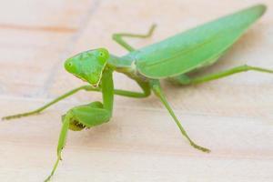 Nahaufnahme grüne Gottesanbeterin auf Holzuntergrund foto