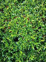 vertikales Foto grüne Blätter des Stachelblumenhintergrundes