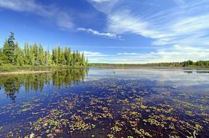 ruhiger Sumpfteich an einem Sommertag foto