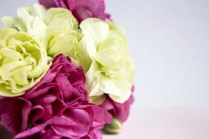 rosa lila und gelbgrüne Nelken auf weißem lila Hintergrund. foto