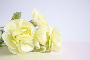 grün-gelbe Blumen auf einem weißen lila Hintergrund. Grußkarte. foto