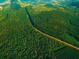 Luftdrohnenfoto von schönen grünen Wäldern und Straßen während des Sommertages foto