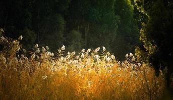 schöne pflanze schilfflora in der natur aussenansicht foto
