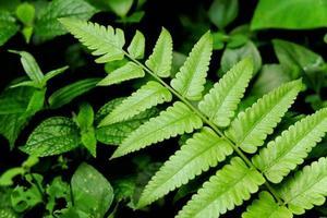 Nahaufnahme eines grünen Farnblattes foto
