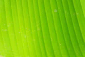 Nahaufnahme Bananenblatt Hintergrund Textur foto