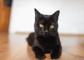 schwarze Katze mit gelben Augen liegt auf der Seite, Beine ausgestreckt foto