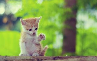 Kätzchen sitzt und starrt auf etwas. Hebe das Bein an foto