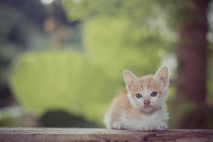Kätzchen sitzend und starrte auf etwas. foto