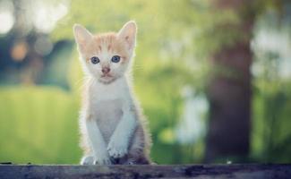 schönes Kätzchen sitzt und starrt auf etwas. foto