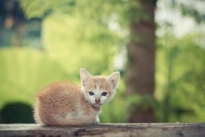 Kätzchen sitzt auf dem Holzboden und schaut nach oben foto