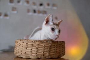 Nahaufnahme einer Katze auf dem Boden, Heimtier foto