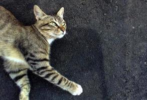 die Katze liegt auf dem Asphalt foto