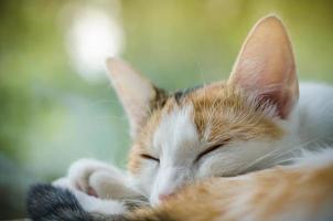 Dreifarbige Katze, die in der Nähe des Fensters schläft foto