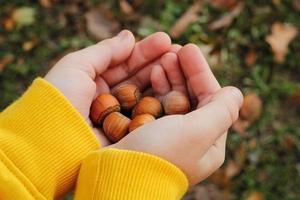 Kinderhände, die Haselnüsse halten foto