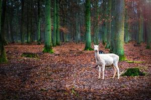 süßes Säugetier Tier Hirsch in einem Wald foto