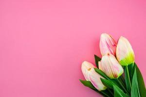 gelbe Tulpenblume mit flachem Lay auf dem rosa Hintergrund foto