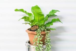 Pflanze im Topf zu Hause Dekoration mit Kopierraum foto