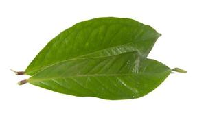 Guavenblatt isoliert auf weißem Hintergrund foto