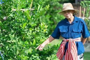Porträt eines älteren asiatischen Landwirts mit lächelndem Gesicht, das in der Farm steht foto