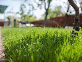 grünes Gras im Hof. ein Haus und ein Garten. ungeschnittenes Gras. Rasen foto