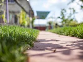 der Weg der Kacheln. grünes Gras im Hof. Rasen foto