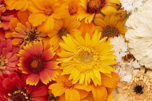 die Zusammensetzung schöne Blumentapete foto