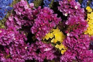 das Sortiment schöner Blumenhintergrund foto