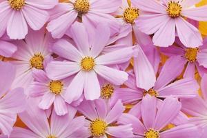 die wunderschöne Anordnung Blumentapete foto
