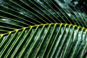 grüner Palmblätter-Musterhintergrund. abstrakte Kokospalmen. foto