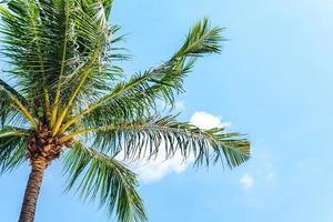 Sommerurlaub mit Kokospalmen foto