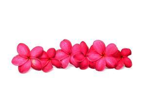 schöne Frangipani-Blüten foto