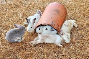 Kaninchen sitzt auf Heuhaufen oder trockenem Gras foto