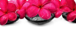 schöne Frangipani-Blüten mit Zen-Stein foto