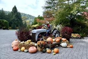 Kürbisse und eine Vogelscheuche auf einem Traktor foto