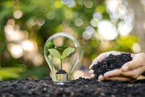ein Baum, der auf einer Silbermünze in einem Energiespar- und Umweltkonzept der Glühbirne am Tag der Erde wächst. foto