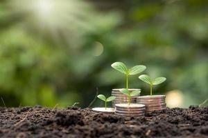 der Baum wächst auf einem Haufen Münzen mit natürlicher Kulisse, verschwommenem Grün, geldsparenden Ideen und wirtschaftlichem Wachstum. foto