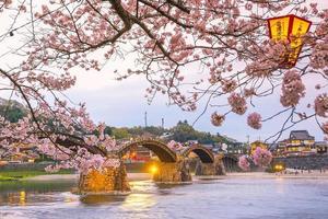 Kirschblüte in voller Blüte an der Kintaikyo-Brücke foto