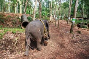 Indischer Elefantenarbeiter auf der Straße im Regenwald in Südindien foto