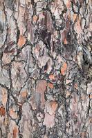 natürlicher Baumstamm aus Baumrinde foto
