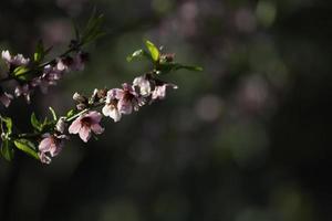 rosa Hintergrund bestehend aus Blumen foto