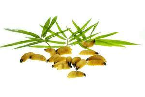 Wurm Palmblatt foto