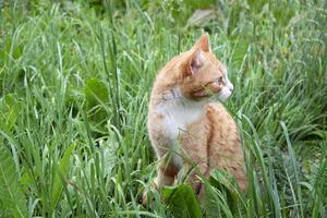 die Katze sitzt im nassen Gras foto