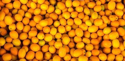 Kumquats auf den griechischen Inseln von Korfu foto