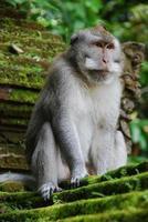 Affenwald von Ubud auf Bali foto